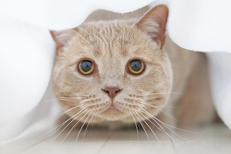 猫の写真_11.JPG