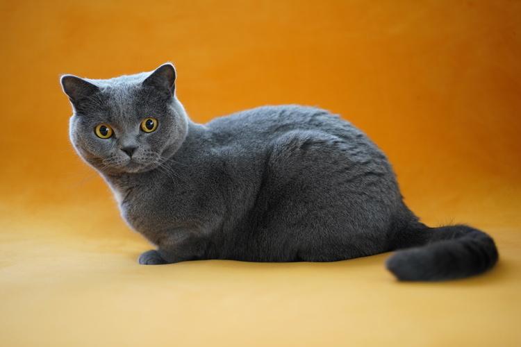 猫の写真_12.JPG