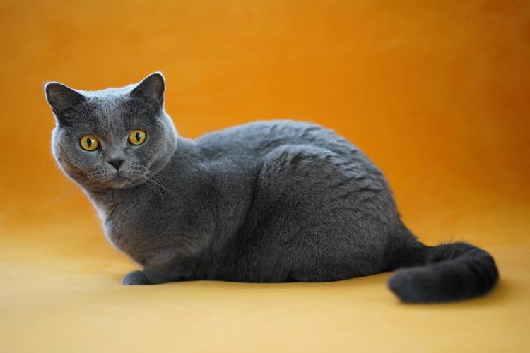 猫の写真_13.JPG