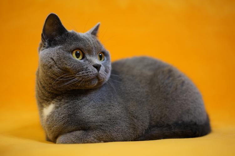 猫の写真_14.JPG