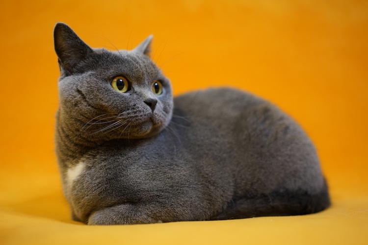 猫の写真_15.JPG