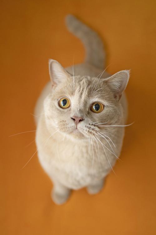猫の写真_17.jpg