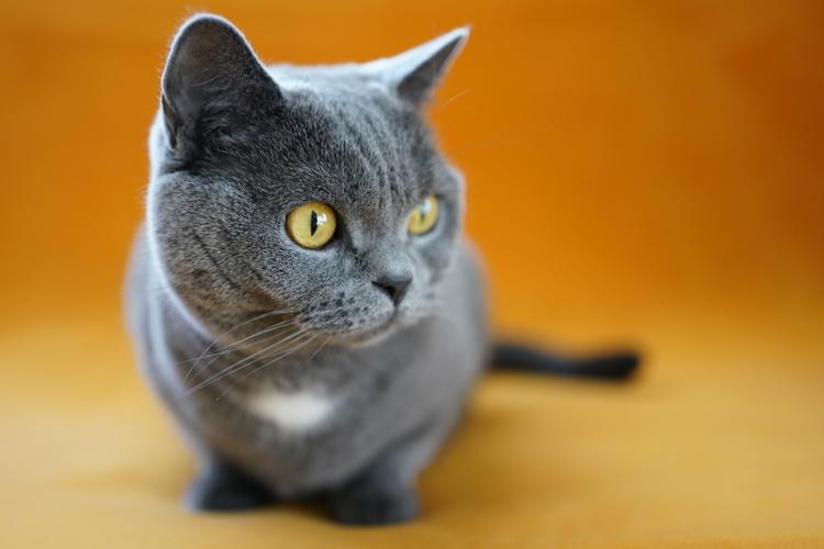 猫の写真_2.JPG