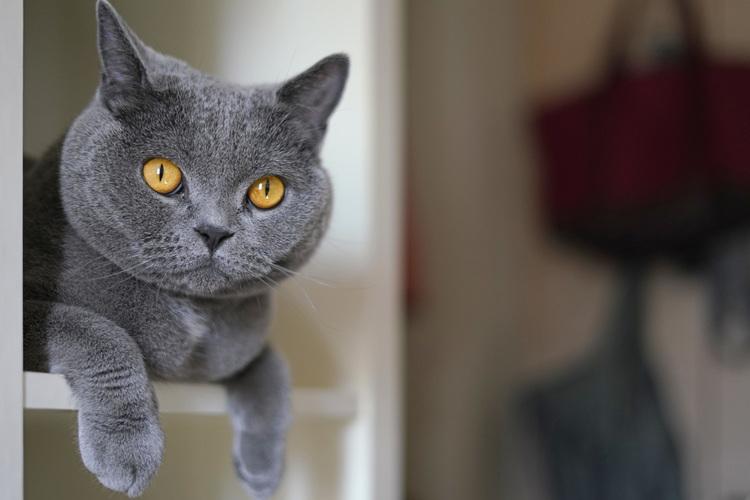 猫の写真_3.JPG