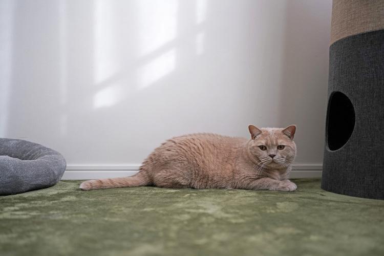 猫の写真_4_35mm.JPG