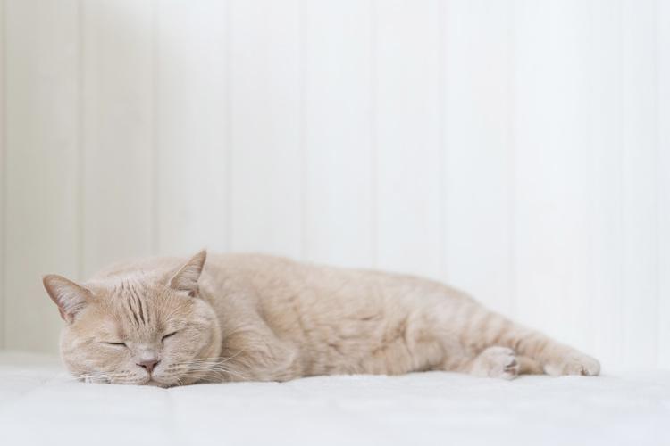 猫の写真_6.jpg
