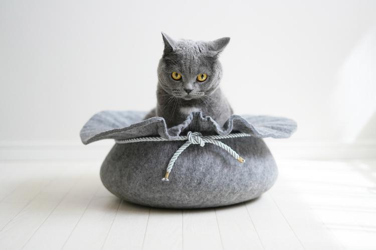 猫の写真_7.jpg
