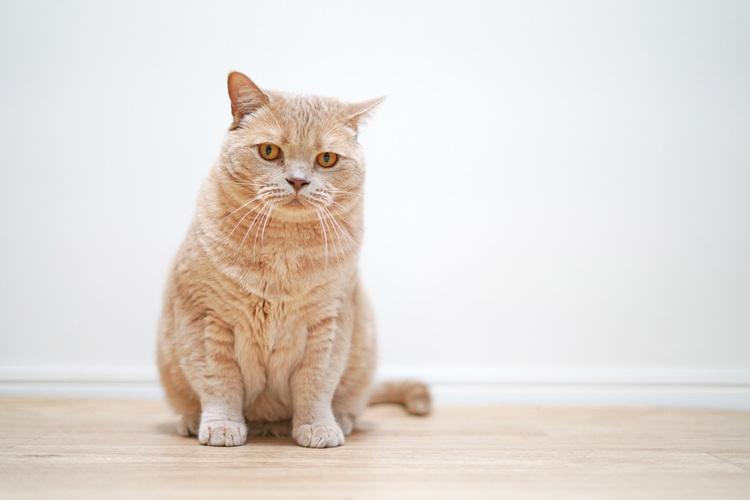 猫の写真_9.JPG