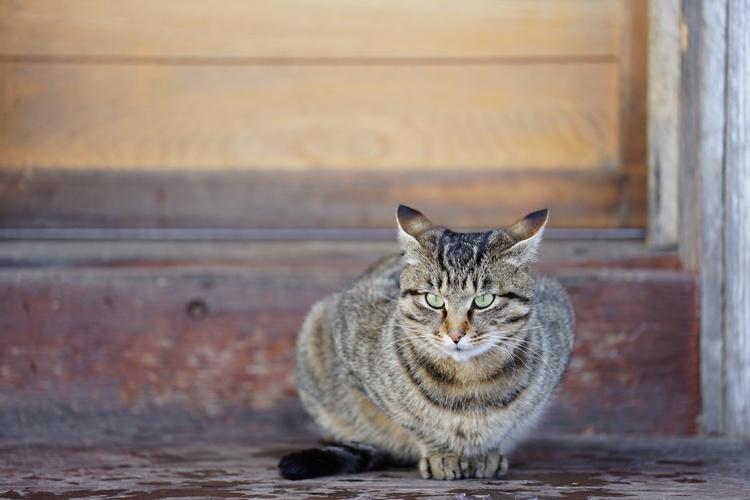 猫作例.JPG