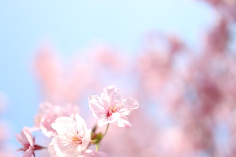 空を多めに桜を撮影した写真.JPG