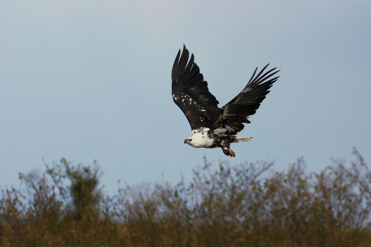 空を飛ぶ鳥の画像.jpg