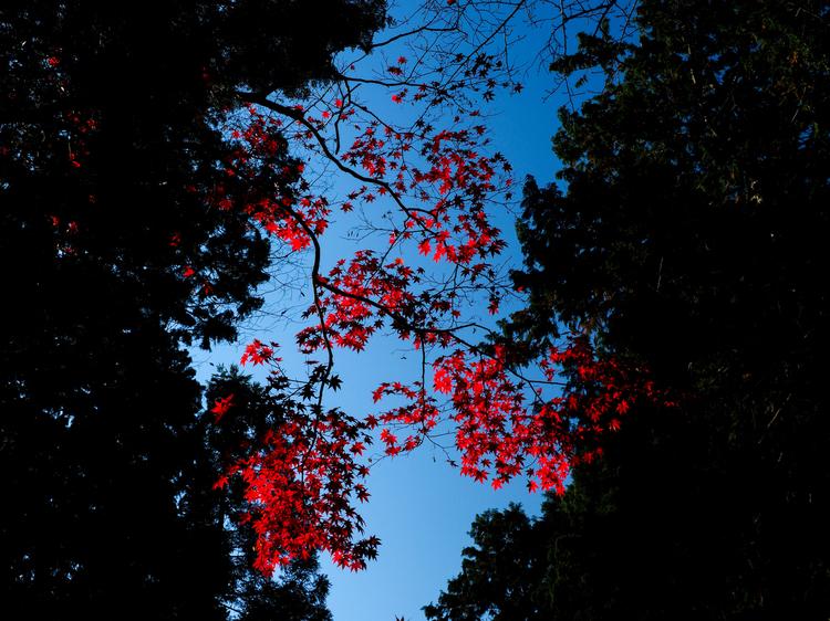 紅葉明暗差