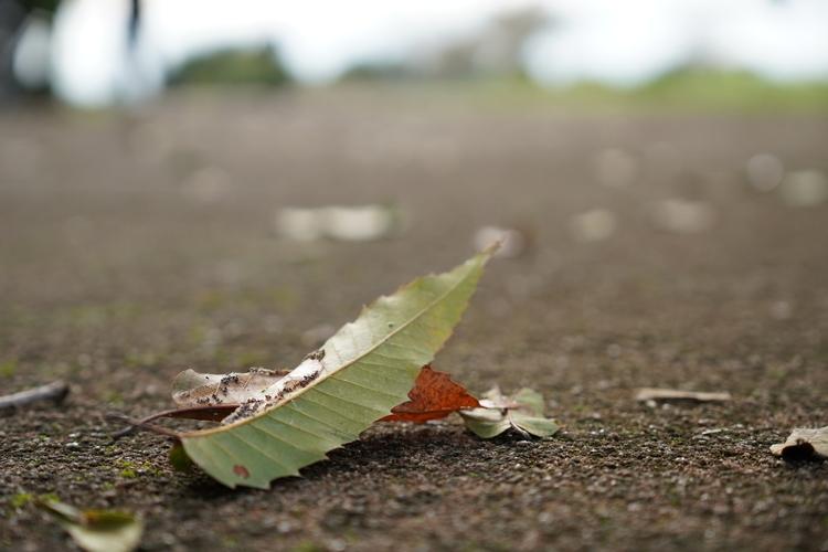 落ちていた葉を撮影した写真.JPG