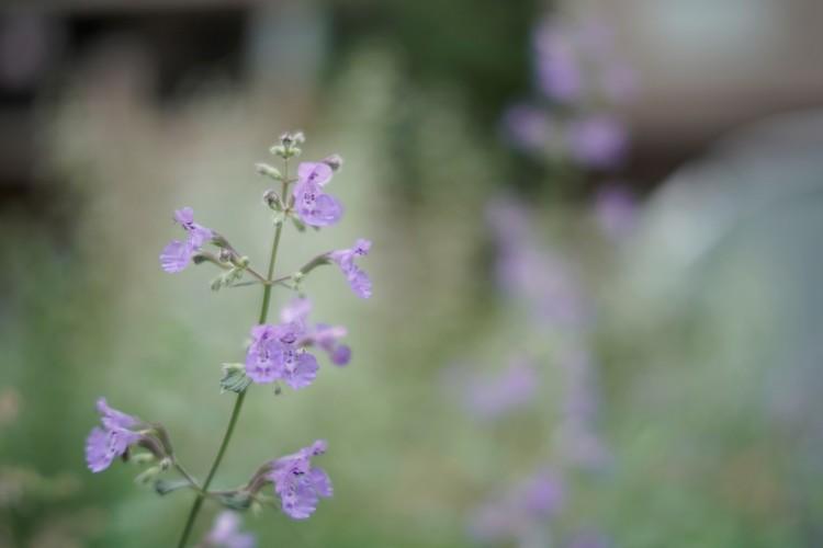 最短撮影距離で撮影した花の画像