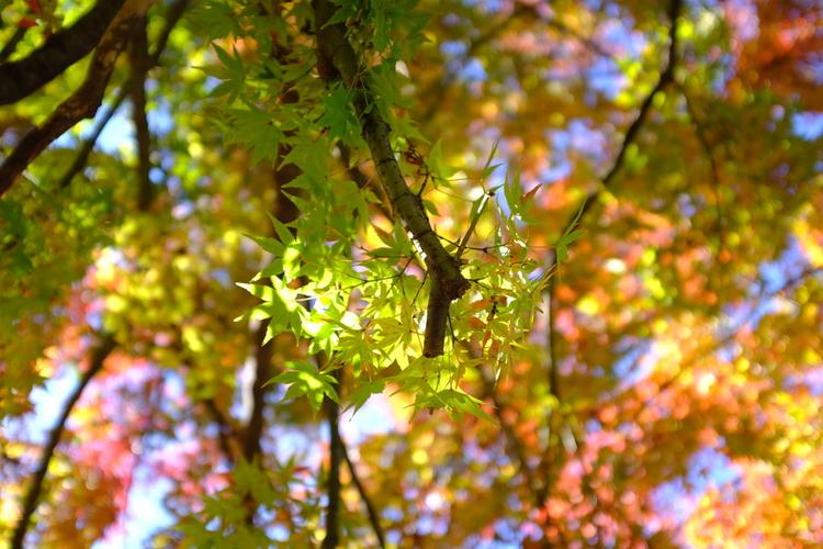 逆光で緑葉を撮影した写真.JPG
