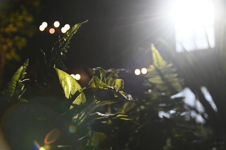 逆光で葉を撮影した写真.JPG