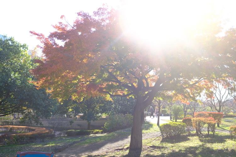 逆光のシーンで木を撮影した写真.JPG