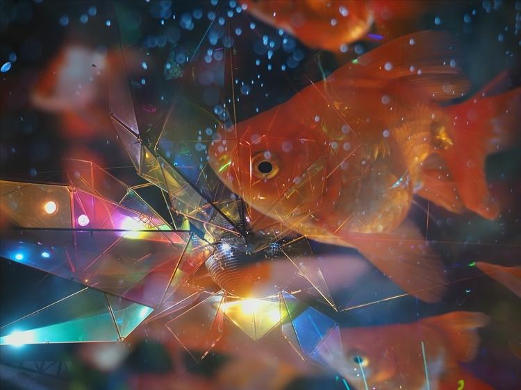 金魚作例_Vivid.jpg