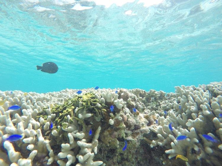 GoPro水中魚画像2