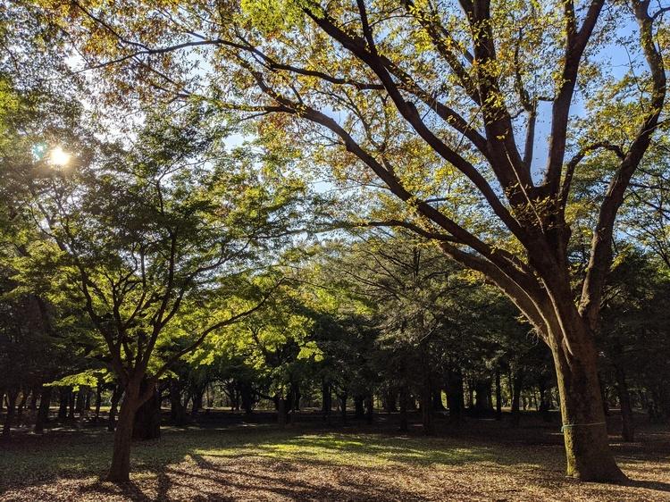 紅葉が近づく都市公園の画像.jpg