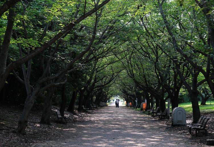 アーチ状に生い茂る木々